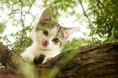 Il piccolo gattino è sedentesi e rilassantesi su un albero Fotografie Stock Libere da Diritti