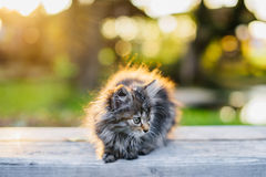 Il piccolo gattino che si siede su un banco alla luce solare dell'estate rays Immagine Stock