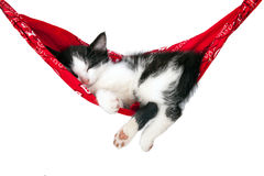 Il piccolo gattino dorme su un'amaca Immagini Stock Libere da Diritti