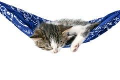 Il piccolo gattino dorme su un'amaca Fotografia Stock