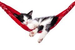 Il piccolo gattino dorme su un'amaca Immagine Stock