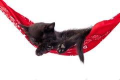 Il piccolo gattino nero dorme su un'amaca rossa Il piccolo gatto dorme dolce come piccolo letto Immagini Stock Libere da Diritti