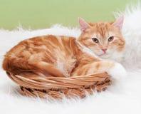 Il piccolo gattino rosso con giallo osserva la menzogne nel canestro di vimini Immagine Stock Libera da Diritti