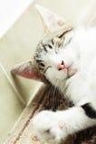 Il piccolo gatto sveglio si rilassa Immagini Stock