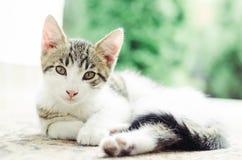 Il piccolo gatto sveglio si rilassa Immagine Stock
