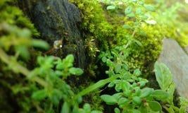 Il piccolo giardino fotografie stock libere da diritti