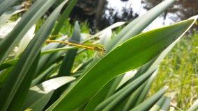 Il piccolo insetto della mosca dell'uccello di verde della natura della lucciola lascia bello luminoso Fotografia Stock