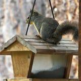 Il piccolo ladro e l'alimentatore dell'uccello fotografia stock