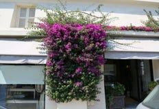 Il piccolo negozio nel sud della Francia con la buganvillea fiorisce Fotografia Stock Libera da Diritti