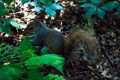 Il piccolo scoiattolo che si diletta su su in un albero immagine stock libera da diritti