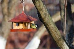 Il piccolo uccello sta alimentandosi ad una mangiatoia Immagini Stock Libere da Diritti