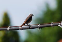 Il piccolo uccello sta cercando Immagini Stock