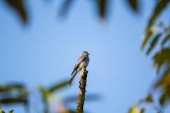 Il piccolo uccello sull'albero Immagini Stock Libere da Diritti