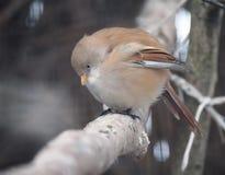 Il piccolo uccello sveglio sta sedendosi al ramo Fotografia Stock