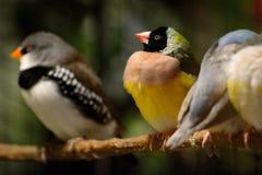Il piccolo uccello variopinto si siede su un ramo Fotografia Stock Libera da Diritti