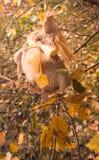 Il piccolo uomo magico da un licenziamento nel legno di autunno sulla betulla Fotografia Stock