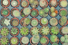 Il piccolo vassoio del cactus nel negozio della pianta immagine stock
