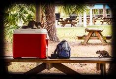 Il picnic dello scoiattolo Fotografia Stock