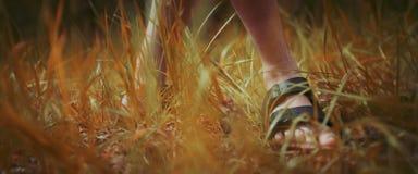 Il piede degli uomini in sandalo sull'erba fotografie stock libere da diritti