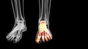 Il piede scheletrico illustrazione di stock