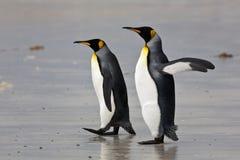 Pinguini di re Fotografie Stock