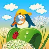 Il pinguino sta studiando gli insetti Immagini Stock