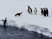 Il pinguino vola Fotografia Stock Libera da Diritti