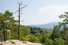 Il pino asciutto sta fra le rocce Fotografia Stock