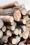 Il pino dell'albero del taglio registra di recente il ‹del ‰ ÐºÑ del ‰ Ñ del ² Ñ del ³ Ð?Ð del ‰ Ð di Ñ Fotografia Stock Libera da Diritti