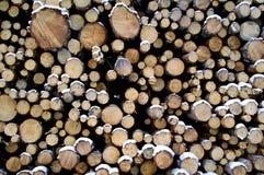 Il pino impilato apre la sessione la neve Fotografia Stock
