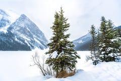 Il pino innevato in valle bianca beyween il mounta alto alto Immagini Stock