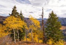 Il pino morto solo Fotografie Stock