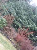 Il pleut Photo libre de droits