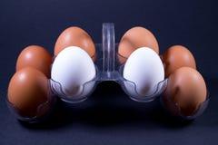 Il pollo bianco e marrone eggs in un pacchetto di plastica fotografia stock libera da diritti