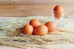 Il pollo eggs con riso sulla tavola di legno e sulla scatola di legno Immagine Stock Libera da Diritti