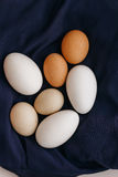 Il pollo eggs su un tovagliolo blu su una tavola bianca Vista da sopra Fotografie Stock Libere da Diritti