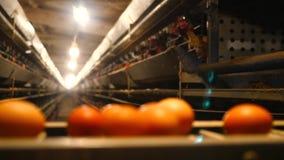 Il pollo fresco e crudo eggs su un nastro trasportatore, essendo muovendo verso il deposito Consumismo, produzione di uova, autom archivi video
