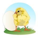 Il pollo sta davanti all'uovo intero Piccolo pulcino lanuginoso Vettore illustrazione vettoriale