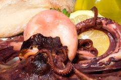 Il polyp dell'insalata Fotografie Stock Libere da Diritti
