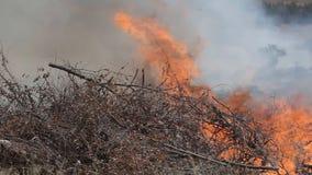 Il pompiere mette fuori il fuoco stock footage