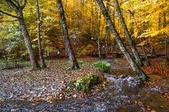 Il ponte di legno con caduto rimane il lago Fotografia Stock Libera da Diritti