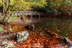 Il ponte di legno con caduto rimane il lago Immagine Stock Libera da Diritti