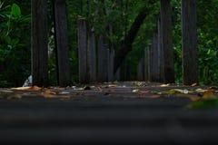 Il ponte di legno nella foresta, Fotografia Stock Libera da Diritti