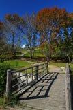 Il ponte ed il cielo blu di legno con l'albero di acero Fotografia Stock