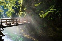 Il ponte sopra la gola di Vintgar ed il fiume di Radovna con il percorso di camminata vicino ha sanguinato in Slovenia Immagine Stock