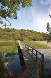 Il ponticello sopra i laghi Bosherton nel Galles Immagini Stock