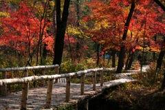 Il ponticello in valle dei fogli d'autunno rossi Fotografie Stock