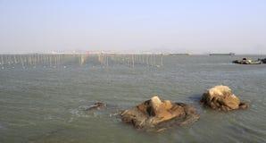 Il Porphyra sistema alla spiaggia dell'isola del xiaodeng, porcellana fotografia stock