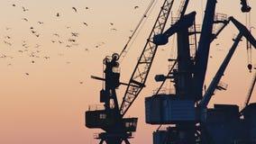 Il porto profilato cranes il trasporto di caricamento durante l'ora dorata video d archivio