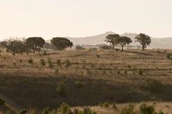 Il Portogallo. Alantejo. Immagine Stock Libera da Diritti